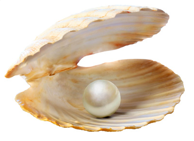 oyster-shell